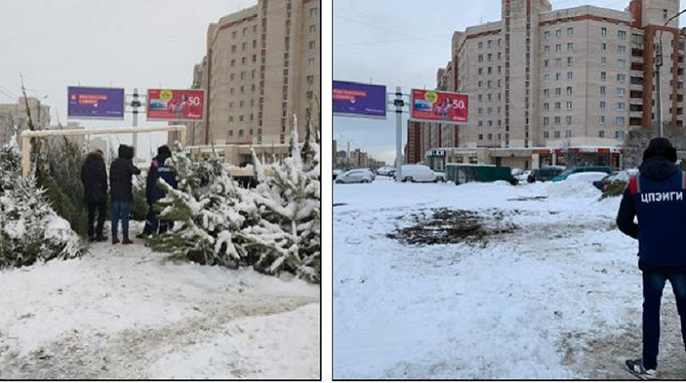 В двух районах Петербурга нашли незаконные елочные базары