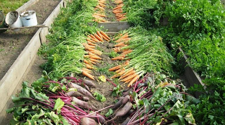 Самарский министр извинилась за совет завести огород малоимущим
