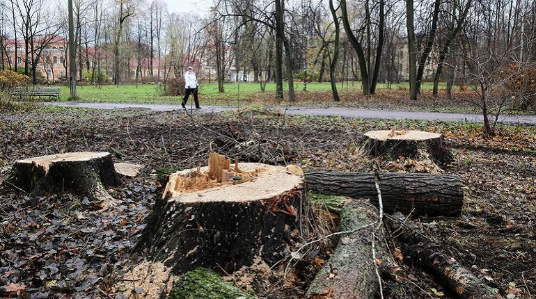 Комитет по благоустройству обрекает на гибель до 15% деревьев в Петербурге?
