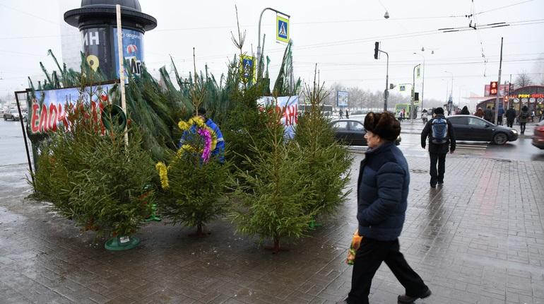 Во Фрунзенском районе уничтожают нелегальные елочные базары