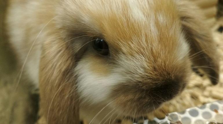 Доставщик «Яндекс.Еды» рассказал, зачем украл кролика
