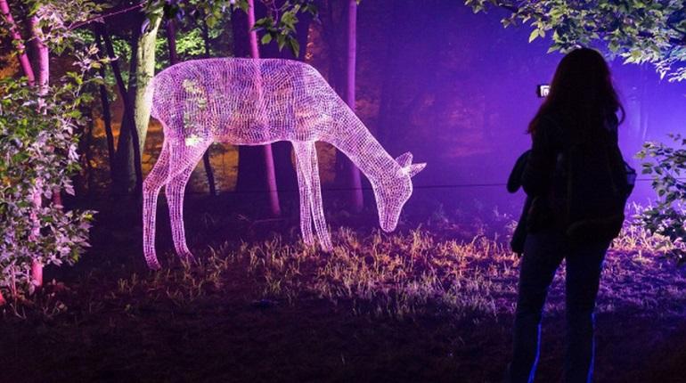 В Петербурге откроют выставку «Сад сновидений»