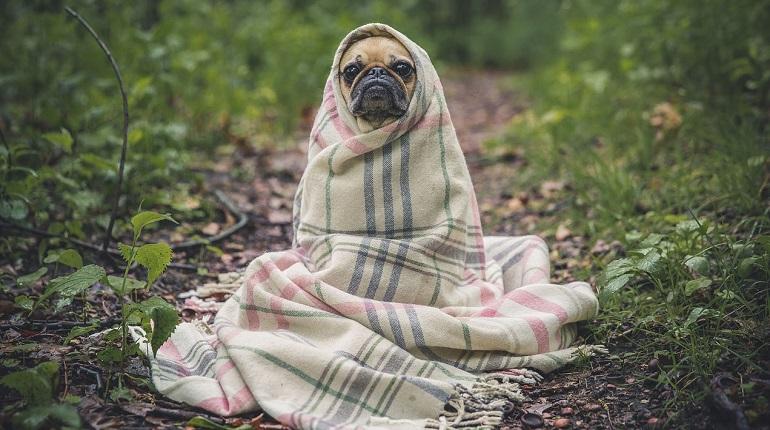 Ученые: собаки испытывают стресс вместе с хозяевами