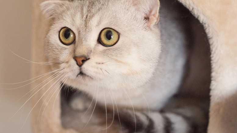Минстрой хочет запретить замуровывать кошек в подвалах
