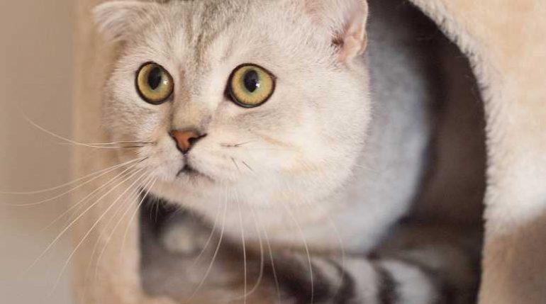 У кошки в России нашли коронавирус