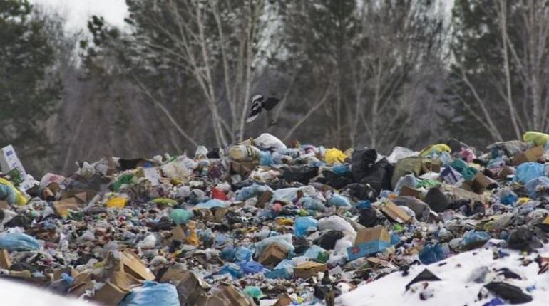 Районы Петербурга получили миллиард на борьбу со свалками