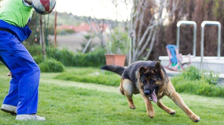 На финской таможне отказались от использования собак в обнаружении инфицированных COVID-19