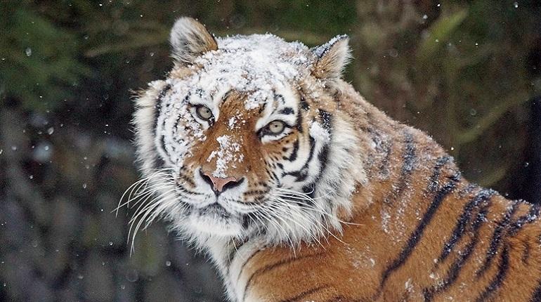 Больше 500 видов животных на Земле исчезнут к концу XXI века