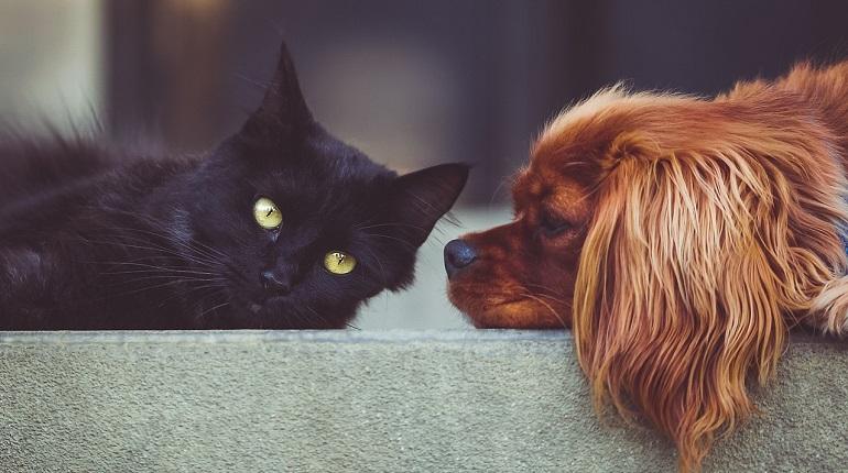 В Ленобласти началась осенняя вакцинация домашних животных от бешенства