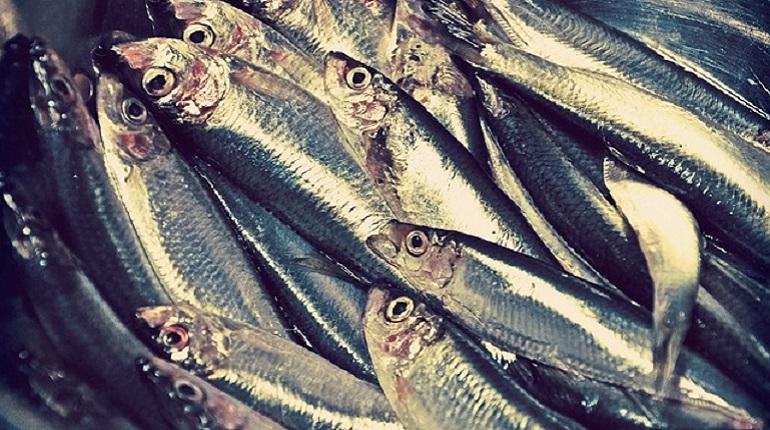 Канадец устроил дебош в бизнес-классе из-за отсутствия рыбы на борту