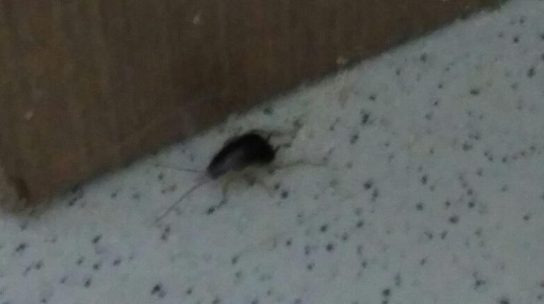 В школе на Маршала Захарова началось нашествие тараканов и клопов