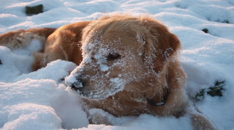 Места для выгула собак в Петербурге определят муниципалы. Фото: pixabay.com