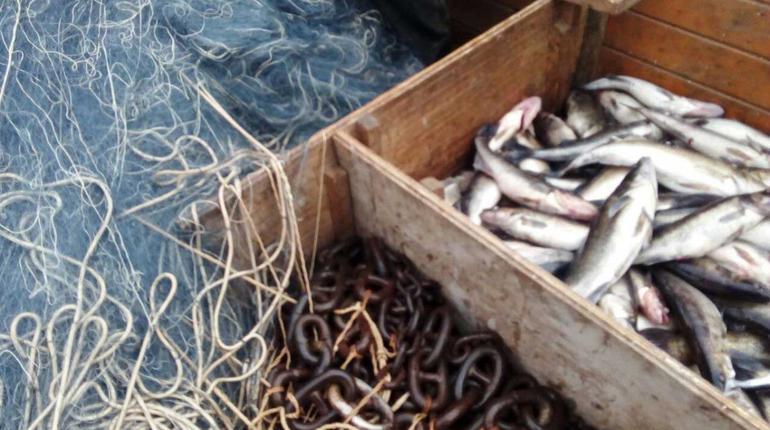 Российские пограничники пострадали в стычке с браконьерами в Японском море