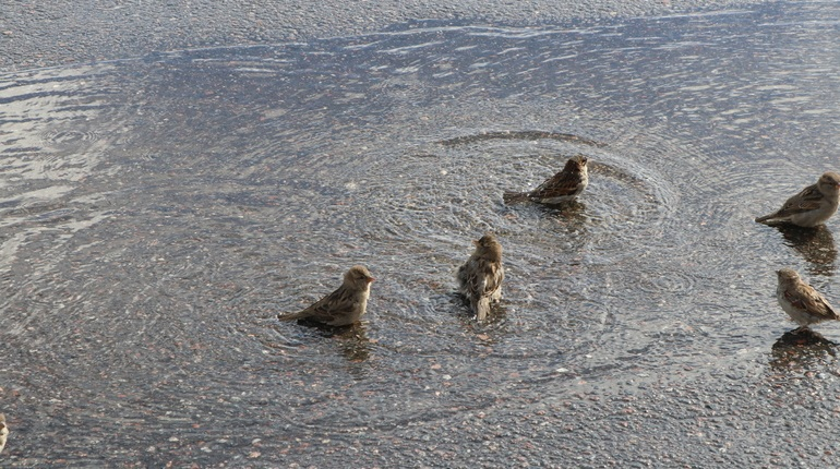 Комитет по природопользованию ищет источник загрязнения Невы нефтью