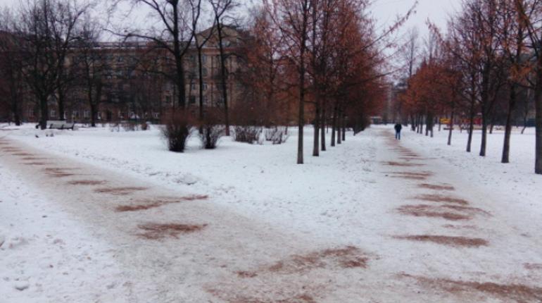 На благоустройство парков и садов в Петербурге выделили крупную сумму. Фото: Комитет по благоустройству