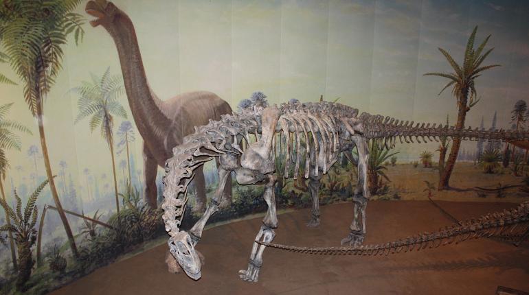 Динозавр принадлежал к числу зауроподов. Фото: Wikipedia