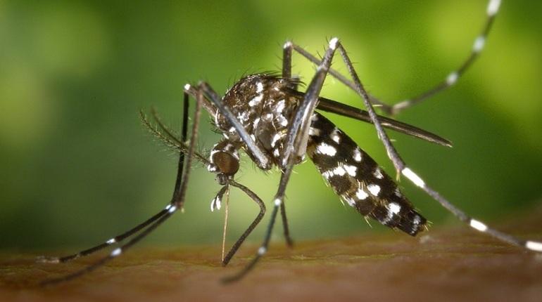 НИИ гриппа: комары и вышки 5G не распространяют коронавирус