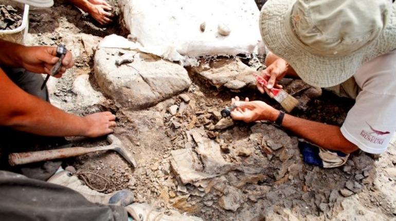 Ученые РГО исследуют обитателей берегов Костромы, живших там более 250 млн лет назад