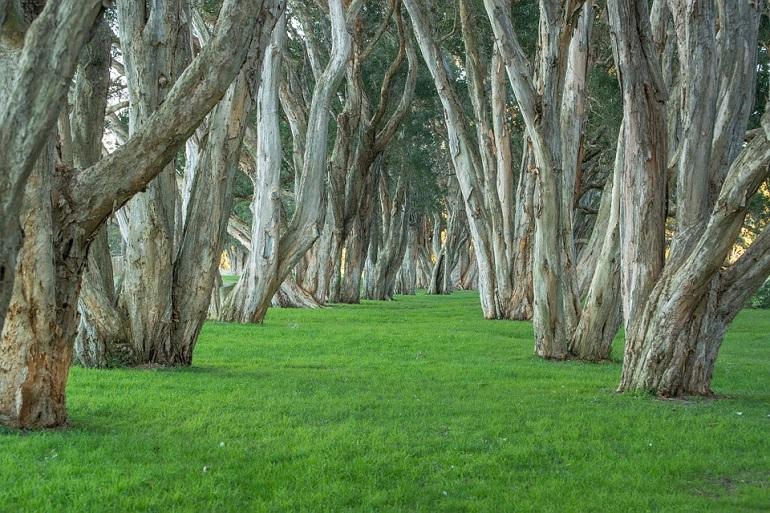 Австралия посадит 1 млрд деревьев, чтобы спасти климат