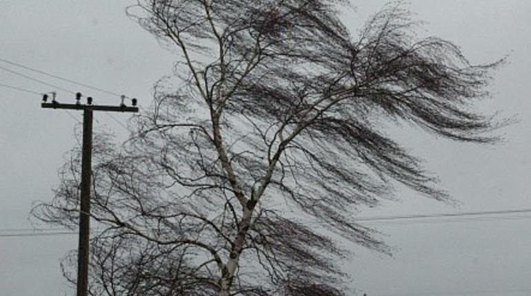 В Петербурге ждут сильный. Фото: flickr.com