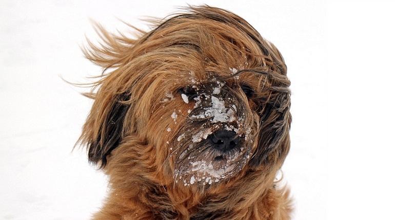 МЧС предупредило о мокром снеге, мороси и ветре до 20 м/с в начале недели