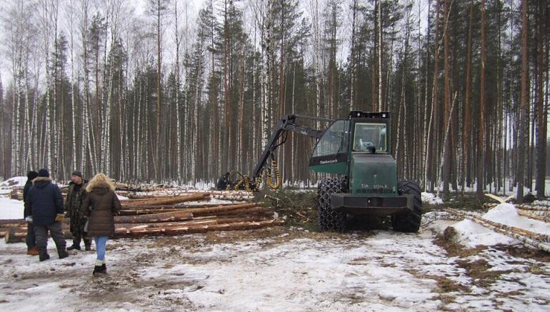 Щепки от рубки леса на Суздальском шоссе летят в Смольный