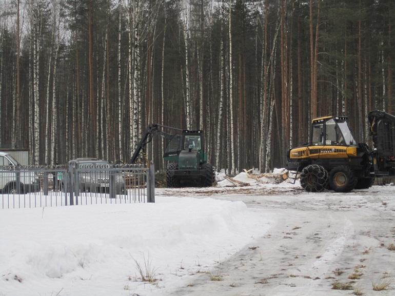 Валка леса для ОЭЗ