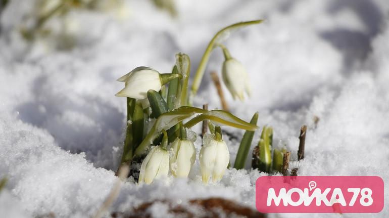 Весна придет в европейскую часть России раньше привычного
