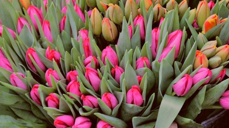 Эксперты дали советы по выбору цветов на Восьмое марта