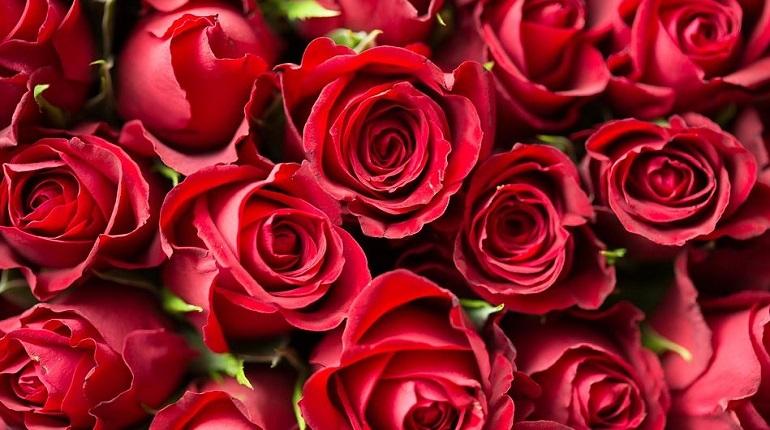 Мужчинам объяснили, как выбирать цветы для женщин к 8 марта