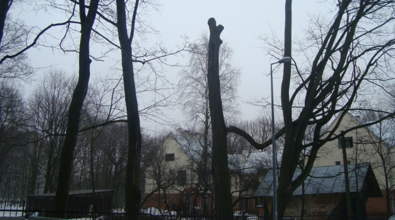 Сквер на 2-м Муринском проспекте. Фото: группа