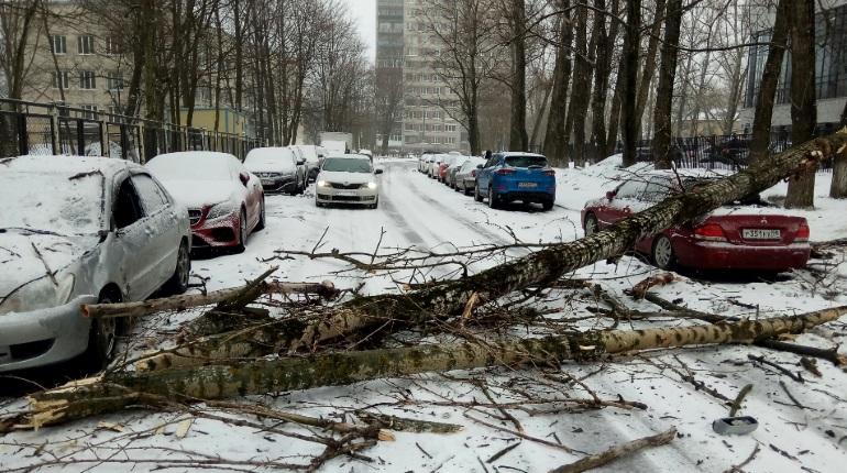 Снежный шторм валит деревья в Петербурге и парализует дороги