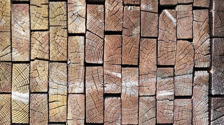 ФАС раскрыла сговор при продаже древесины в Ленинградской области