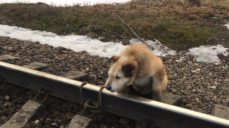 Спасенный пес отправился на лечение. Фото: vk.com/club175336494