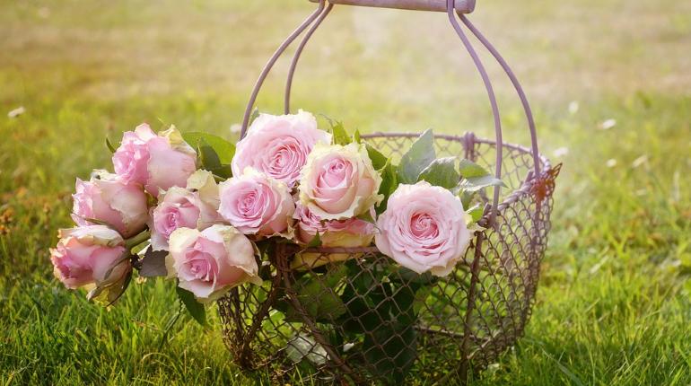 Ленобласть потратит на розы 10 млн рублей