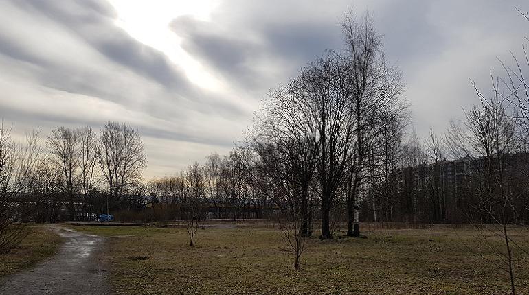 Активисты просят Беглова защитить сквер на Савушкина от «Астаны»