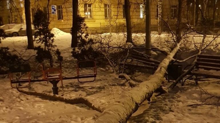 Дерево на детской площадке на Курчатова не убирают  несколько дней. Фото: