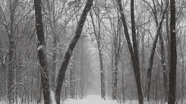 В лесу в Сестрорецке нашли труп пропавшего мужчины. Фото: pixabay.com
