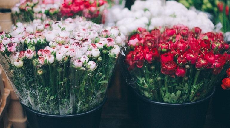 Вторник в Петербурге, 29 октября: цветочная выставка и этнографический диктант