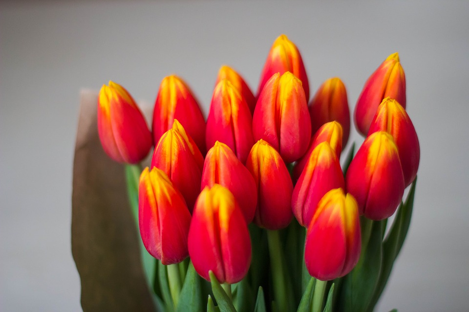 Тюльпаны вместо путешествий. Фото: pixabay