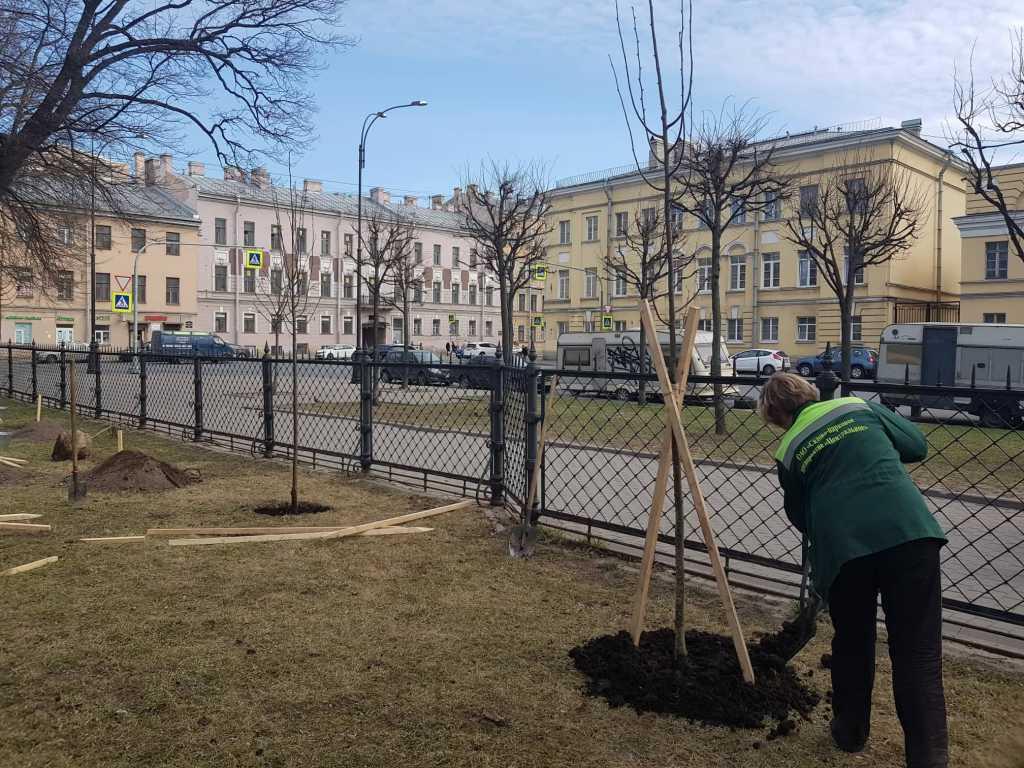 Никольскому саду добавят деревьев — посадят 33 липы и клена