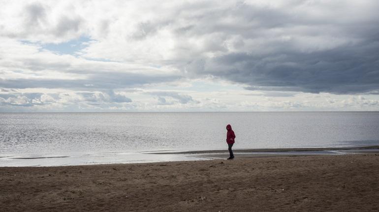 В воде Финского залива обнаружили опасные тяжелые металлы