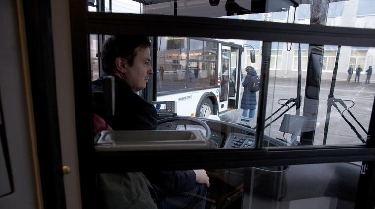 В Петербурге запускают ночные автобусы