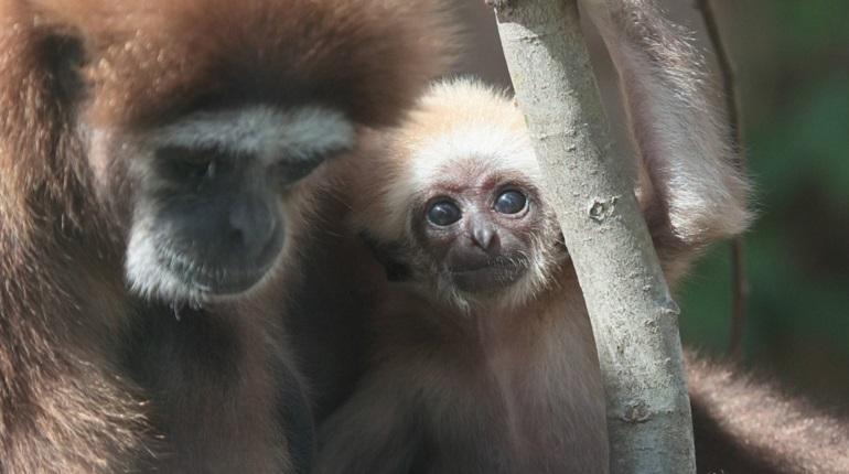 Ленинградский зоопарк отпразднует свой 154 день рождения