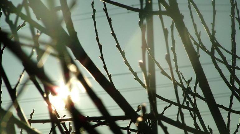 В Петербурге ожидается до 14 градусов тепла. Фото: flickr.com