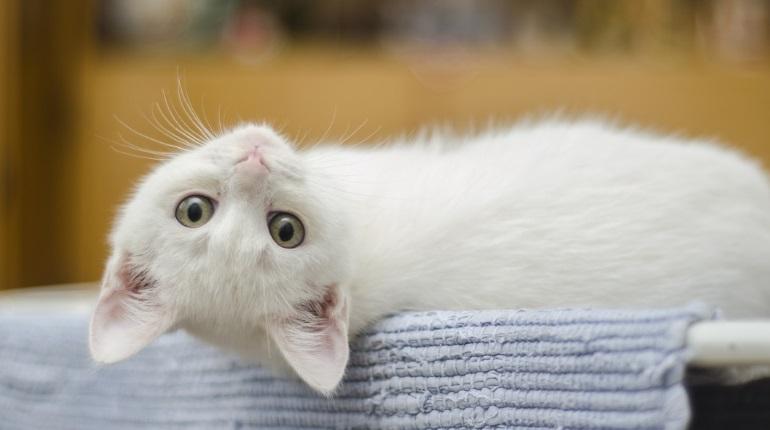 Ученые: кошки привязываются к людям так же, как дети к родителям
