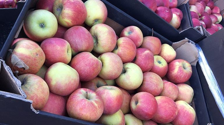 4 тонны яблок уничтожили. Фото: СЗТУ