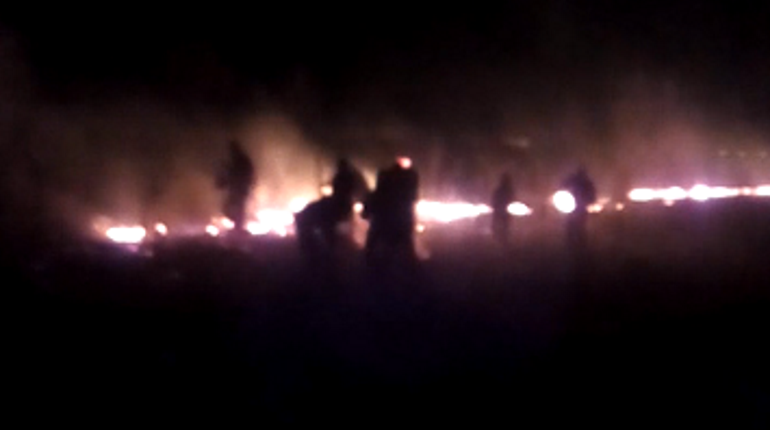 Горящие в Ломоносовском районе поля тушили жители с лопатами