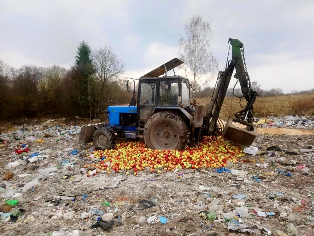 Под Псковом уничтожили 4 тонны яблок