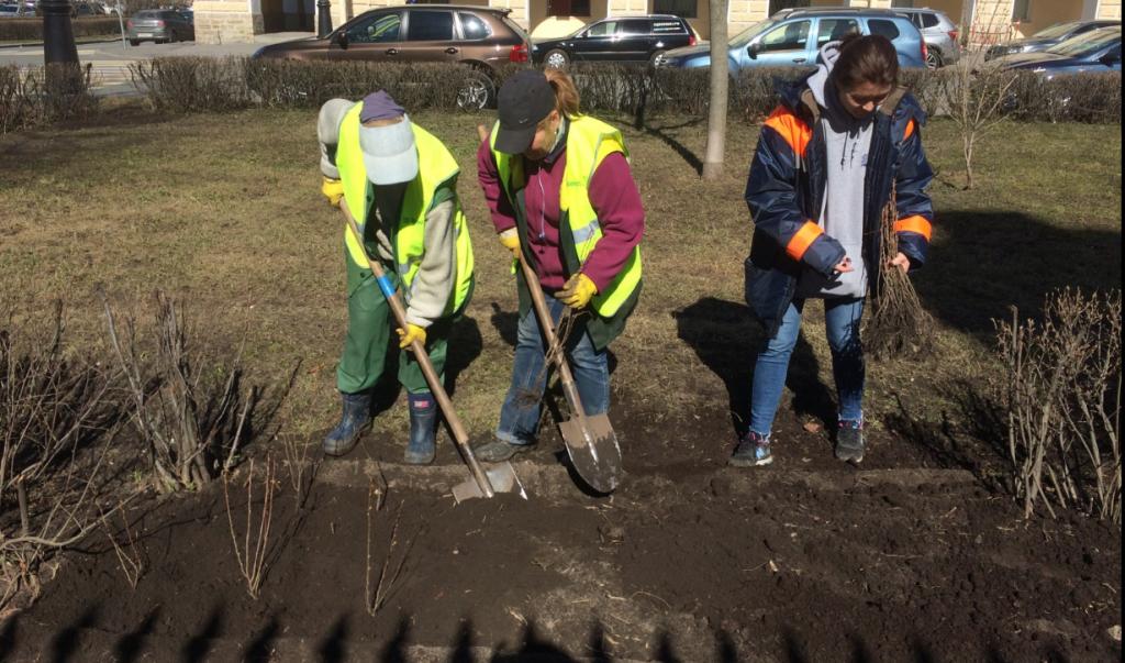 В Петербурге за год хотят посадить 9,5 тысяч деревьев
